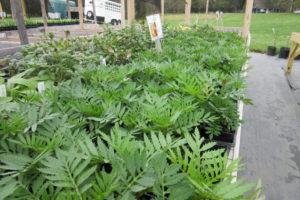Retail Plants