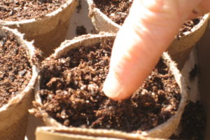 Soil & Seeding Workshop