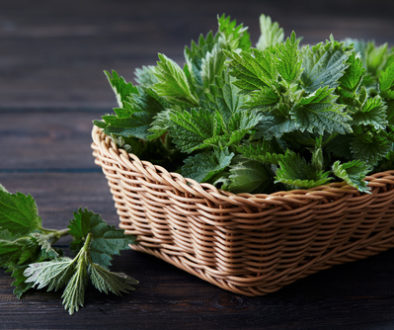 Nettle Has Many Benefits For You, Your Animals and Your Garden